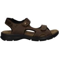 Sapatos Homem Sandálias Panama Jack SALTON C17 Verde