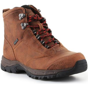Sapatos Mulher Sapatos de caminhada Ariat Trekking shoes  Berwick Lace Gtx Insulated 10016229 brown