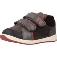 Sapatos Rapaz Sapatilhas Garvalin 191312 Cinza