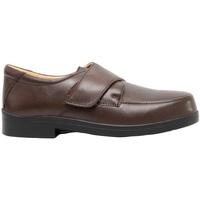 Sapatos Homem Mocassins Roamers  Brown