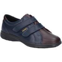 Sapatos Mulher Sapatilhas Cotswold  Marinha / Marrom