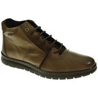 Sapatos Homem Botas baixas Baerchi 5313 Marrón