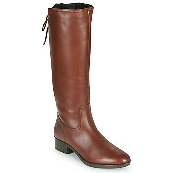 Sapatos Mulher Botas Geox FELICITY Castanho