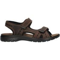 Sapatos Homem Sandálias desportivas Imac 503370 Castanho
