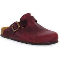 Sapatos Tamancos Bioline 1900 VINO INGRASSATO Rosso