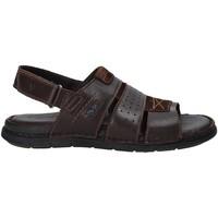 Sapatos Homem Sandálias Valleverde 20831 Castanho