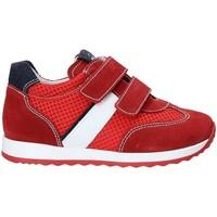 Sapatos Criança Sapatilhas NeroGiardini P923451M Vermelho
