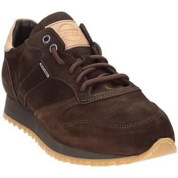 Sapatos Homem Sapatilhas Exton 777 Castanho