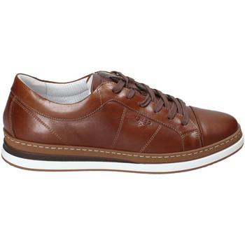 Sapatos Homem Sapatilhas IgI&CO 3138122 Castanho
