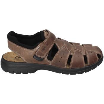 Sapatos Homem Sandálias Enval 3247522 Castanho