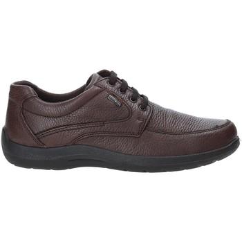 Sapatos Homem Sapatilhas Enval 4233511 Castanho
