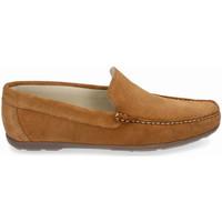 Sapatos Homem Sapato de vela Myers 80737 (14.148) Castanho