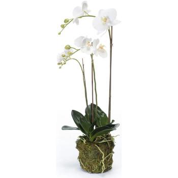 Casa Plantas e Flores Artificiais  Emerald  Branco