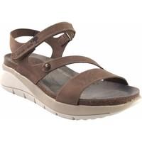Sapatos Mulher Sandálias Interbios Sandália de senhora  6901 taupe Castanho