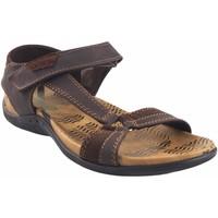Sapatos Homem Sandálias Bitesta sandália 21s  1303b marrom Castanho