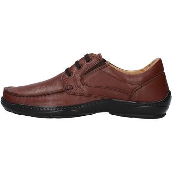 Sapatos Homem Sapatos Melluso U47038L Castanho