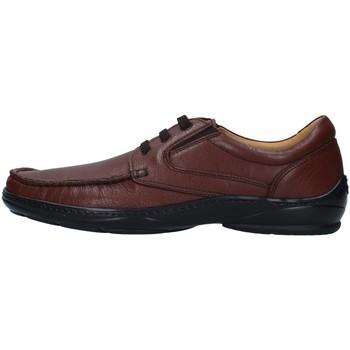 Sapatos Homem Sapatos Melluso U47038A Castanho