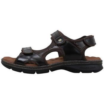 Sapatos Homem Sandálias Panama Jack  Castanho