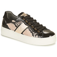 Sapatos Mulher Sapatilhas NeroGiardini  Preto / Ouro
