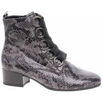 Sapatos Mulher Botins Gabor 3281540 Cinzento
