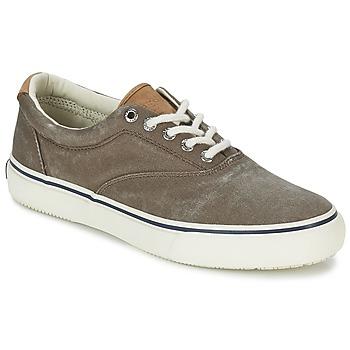 Sapatos Homem Sapatilhas Sperry Top-Sider STRIPER CVO Chocolate