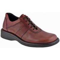 Sapatos Homem Botas baixas Nicola Barbato  Violeta