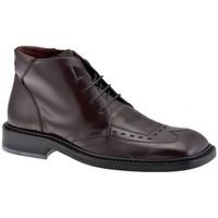 Sapatos Homem Richelieu Dockmasters  Multicolor