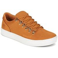 Sapatos Homem Sapatilhas Timberland ADV 2.0 CUPSOLE ALPINE OX Castanho