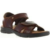 Sapatos Homem Sandálias Panama Jack SANDERS CLAY C1 PULL-UP CUERO Marrón