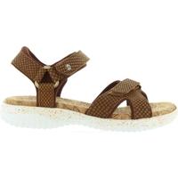 Sapatos Mulher Sandálias Panama Jack NOJA SNAKE B3 Marr?n