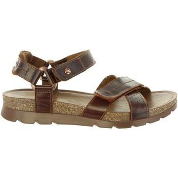 Sapatos Homem Sandálias Panama Jack SAMBO EXPLORER C4 Marrón